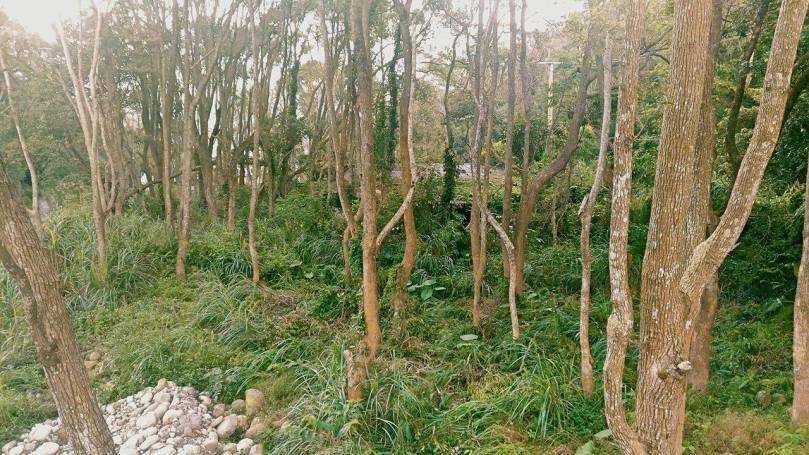 taiwan_nature-5
